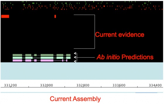 Generate ab initio gene predictions