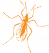Arthropod Genomics Symposium