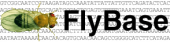 Senior Database Programmer at FlyBase